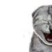 القطة الضاحكة :)